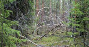Karelia-2013-18-620x330