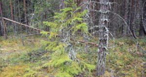 Karelia-2013-22-620x330