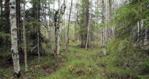 Karelia-2013-23-620x330